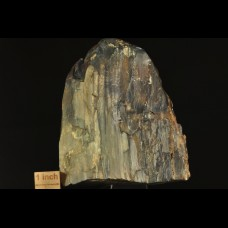 Silificated petrified wood