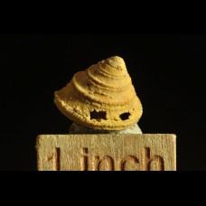 jurassic gastropod age: callovian