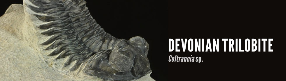 trilobite Coltraneia